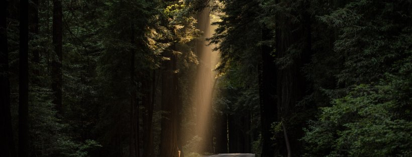 a beam of light falls onto the roadway through a forest